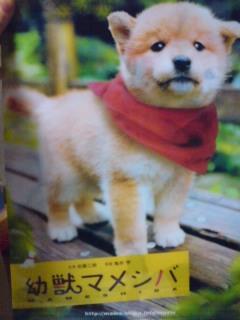 「幼獣マメシバ」映画版前売り特典