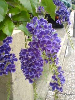花の名前。