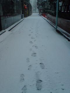 東京はかなりの雪降り中
