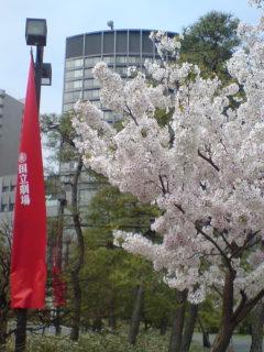 国立劇場三月歌舞伎「隅田川花御所染」を観る