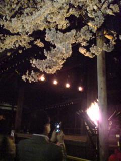 靖国神社夜桜能「第一夜」を途中まで観る