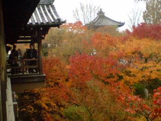 (京都5)雨の中、東福寺の「通天橋」の紅葉を見に行く