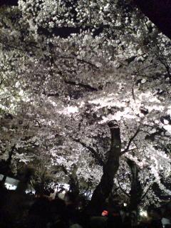 「奉納靖国神社夜桜能(第2夜)」を観る